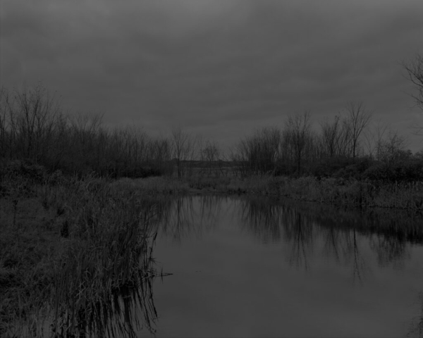 Dawoud Bey  American, born 1953 Untitled #12 (The Marsh) from the series Night Coming Tenderly, Black 2017 Gelatin silver print mounted to museum board and Dibond Museum Purchase with funds provided by The Contemporaries, in memory of Sylvia Goldberg and Donald Dick