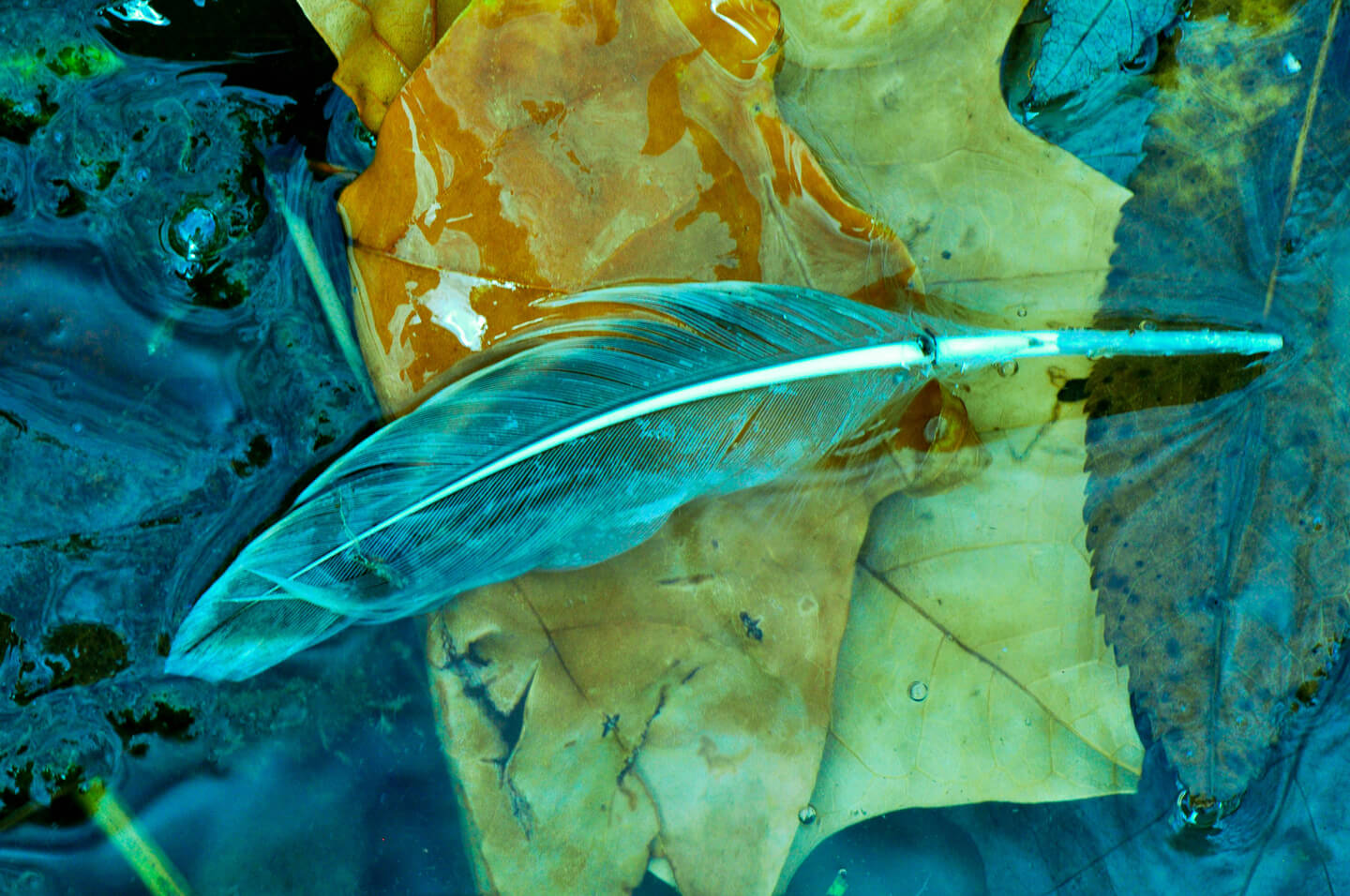 Julia Walkowicz - Feathers and leaves