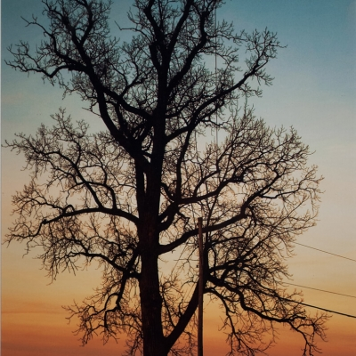 Christine Ruddy - Tree at Sunset