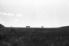 Clair Farris - Wild Horses