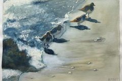 Rebecca Taft - Shore Birds